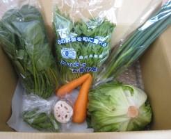 4月11日着野菜一覧