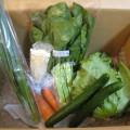 2014年5月9日野菜一覧