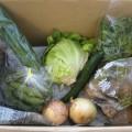 5月23日野菜一覧