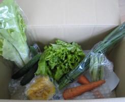 2014年6月20日野菜一覧