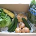 2014年7月4日便野菜一覧