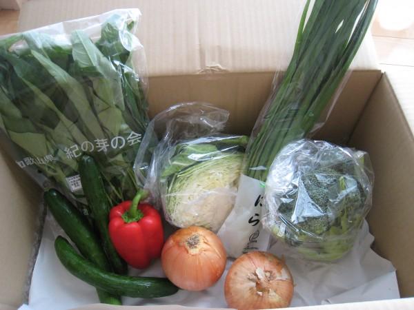 2014年7月25日野菜一覧