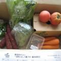 2014年9月5日野菜一覧