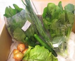 2014年10月24日着野菜一覧