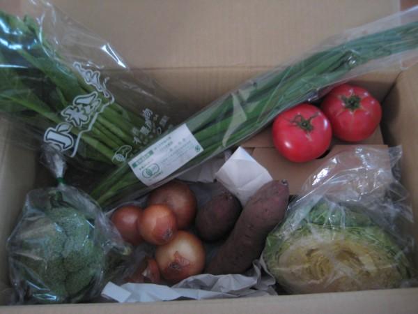 2014年11月7日野菜一覧