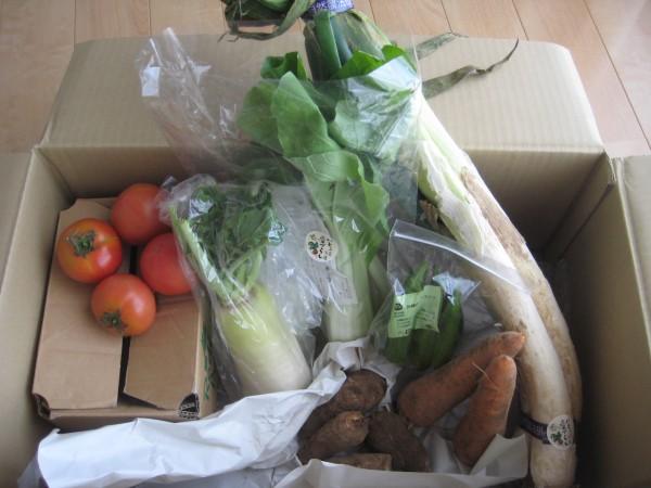 2014年11月27日着野菜一覧