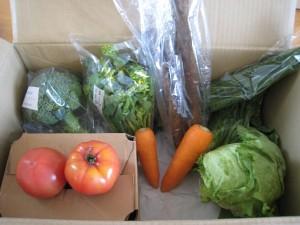 2015年3月1週野菜一覧