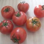 トマト 4月3週