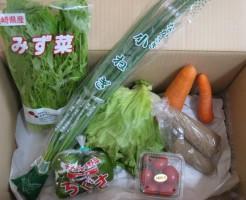 4月16日着野菜一覧