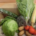 6月3週野菜一覧