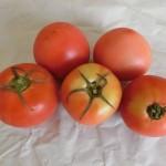 トマト 6月5週