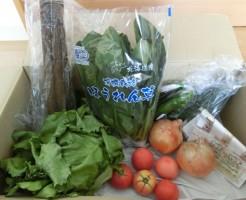 6月5週(7月2日着)野菜一覧