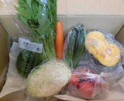 7月1週便野菜一覧