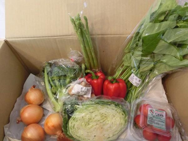 7月3週野菜一覧