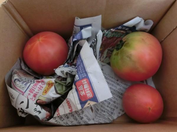 トマト梱包