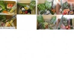 2014年と2015年8月の野菜