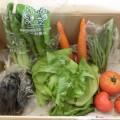 8月5週(9月3日)野菜一覧