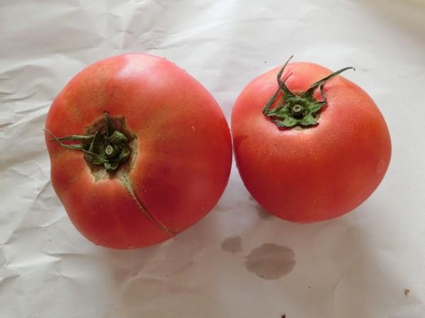 トマト 9月2週