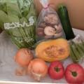 9月2週野菜一覧
