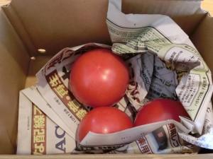 トマト小箱内