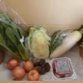 2月4日着野菜一覧