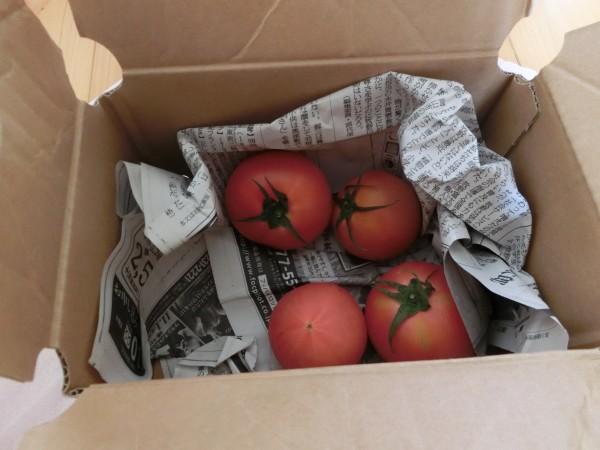 トマト小箱