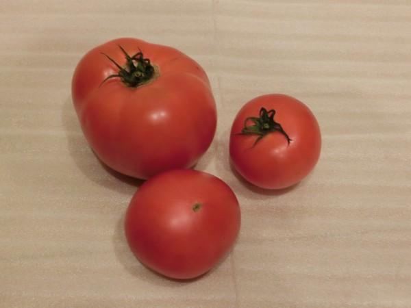 北の達人楠さんのトマト